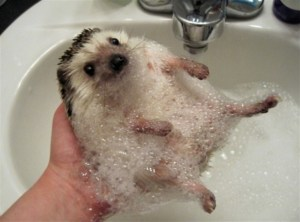 Take this hedgehog with you, you might need it.